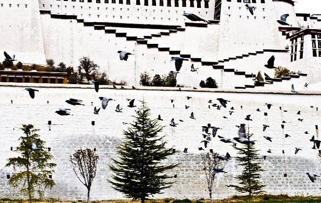 bird flying across the potala Palace